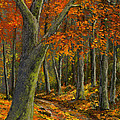 Wooded Road by Frank Wilson