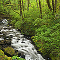 Wooded Stream In The Spring by Andrew Soundarajan