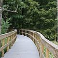 Wooded Walkway by Shari Bailey