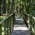 Wooden Boardwalk Through The Forest by SAJE Photography