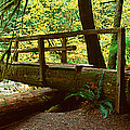 Wooden Bridge In The Hoh Rainforest by Panoramic Images