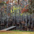 Wooden Dock On Autumn Swamp by Ester  Rogers