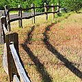 Wooden Fences by Cathy Anderson