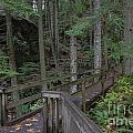 Wooden Forest Trail  by Darleen Stry