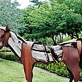 Wooden Horse22 by Rob Hans