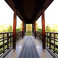 Wooden Path by Scott Hill