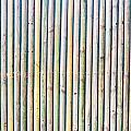 Wooden Poles by Tom Gowanlock