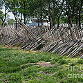Wooden Spiked Fence by Carol Ailles