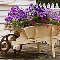 Wooden Wheelbarrow Full Of Flowers by Linda Phelps