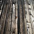 Woodgrain by Janet Moss