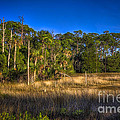 Woodland And Marsh by Marvin Spates