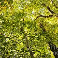 Woodland Background 02 by Antony McAulay
