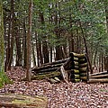 Woodland Cabin Ruins by Jake Donaldson