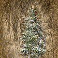 Woodland Christmas by John Haldane