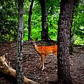 Woodland Deer by Michelle Calkins