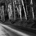 Woodland Drive by Wendell Thompson