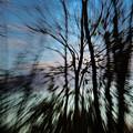 Woodland Flight by Jennifer Kano