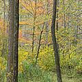 Woodland Interior by Ann Horn