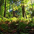 Woodland by Lars Lentz