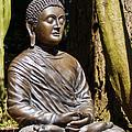 Woodland Meditation by Susie Peek