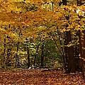 Woodland Path by Bruce Bley