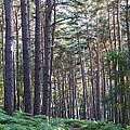 Woodland Path by David Isaacson