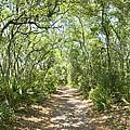 Woodland Path by Glennis Siverson