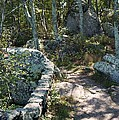 Woodland Path With Stone Wall by MM Anderson