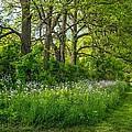 Woodland Phlox   by Steve Harrington