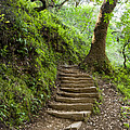 Woodland Stairs by Juan Romagosa