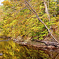 Woodland Stream Early Autumn Montgomery County Pennsylvania by A Gurmankin