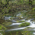 Woodland Stream - Monk's Dale by Rod Johnson