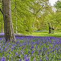 Woodland Walk In Blue by Trevor Kersley