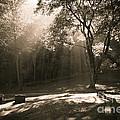 Woodlawn Sunbeams by Kari Yearous