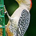 Woodpecker 106 by Patsy Pratt