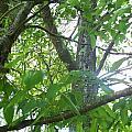 Woodpecker Tree Art by Lisa Wormell