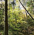Woods by Karen Adams