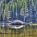 Woods Lake 1 by SC Heffner