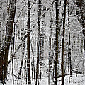 Woods On A Snowy Night by Penny Hunt