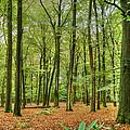 Woods by Uri Baruch