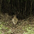 Woodsy Rabbit by Gothicrow Images