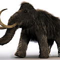 Wooly Mammoth by Science Picture Co