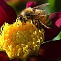 Worker Bee by Jeri lyn Chevalier