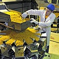 Worker With Pasta Packing Machine by Science Photo Library