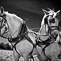 Workhorses by Williams-Cairns Photography LLC