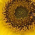 Working Honey Bee by Belinda Lee