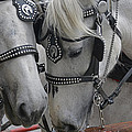 Working Horses by Amanda Sinco