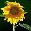 Worshipping The Sun by Susan Savad