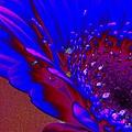 Wow Blue by Carol Lynch