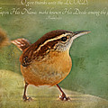 Wren With Verse by Debbie Portwood